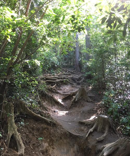 御岩山の参道